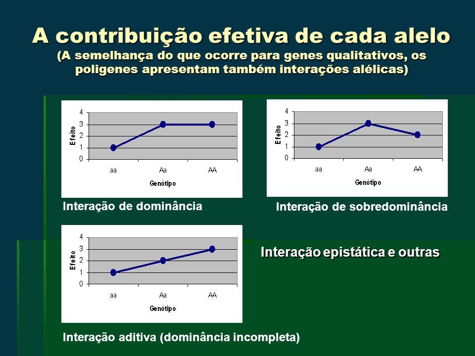 A contribuição efetiva de cada alelo (A semelhança do que ocorre para genes qualitativos, os poligenes apresentam também interações alélicas) Interação epistática e outras Interação de dominância Interação aditiva (dominância incompleta) Interação de sobredominância