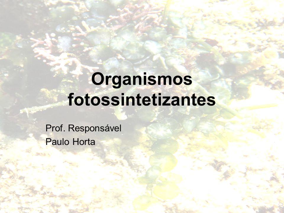 Organismos fotossintetizantes Prof. Responsável Paulo Horta