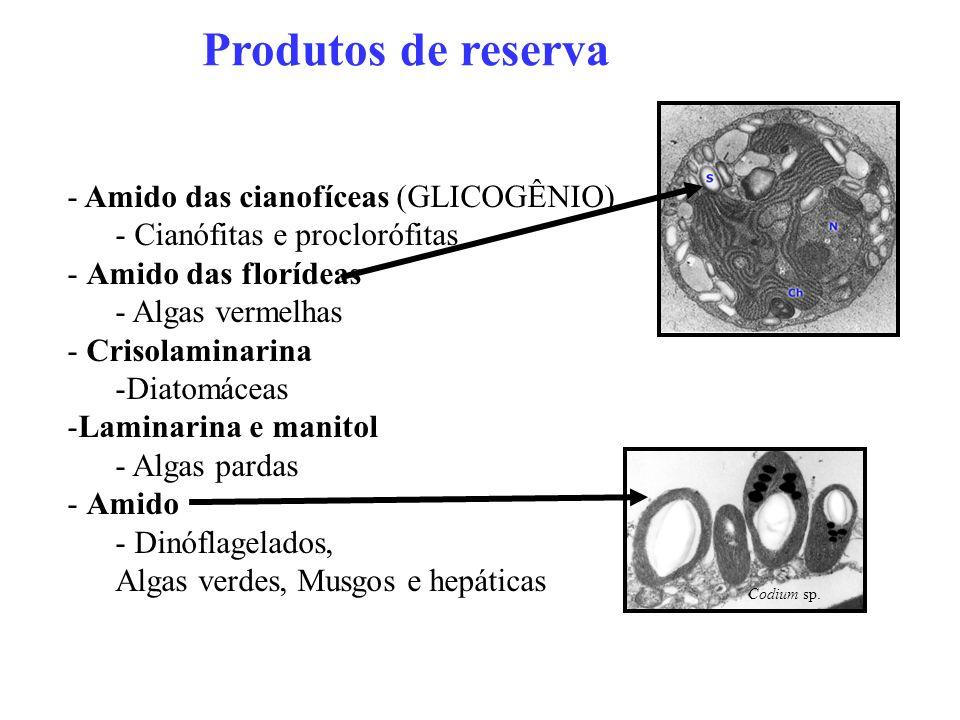 Produtos de reserva - Amido das cianofíceas (GLICOGÊNIO) - Cianófitas e proclorófitas - Amido das florídeas - Algas vermelhas - Crisolaminarina -Diato
