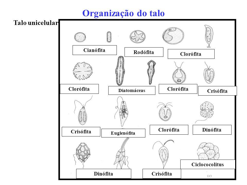 Talo unicelular Organização do talo Cianófita Rodófita Clorófita Diatomáceas Clorófita Crisófita Euglenófita ClorófitaDinófita Crisófita Ciclococolitu