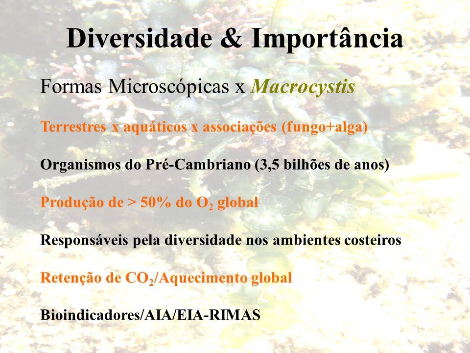 Diversidade & Importância Formas Microscópicas x Macrocystis Terrestres x aquáticos x associações (fungo+alga) Organismos do Pré-Cambriano (3,5 bilhõe