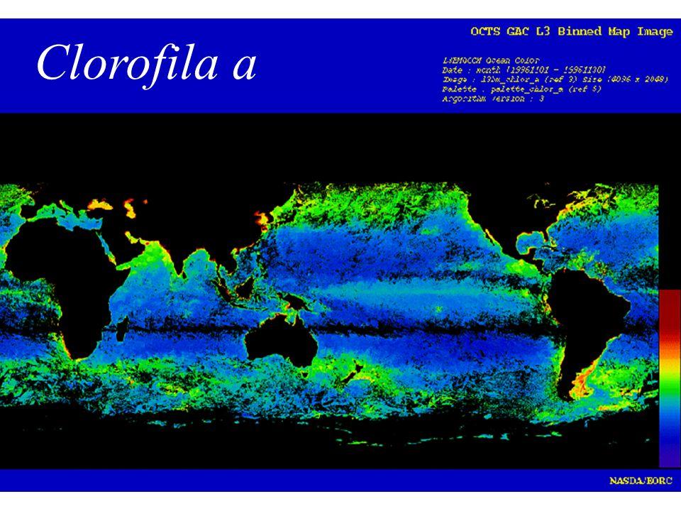 Unicelulares Vista em microscopia óptica Vista em microscopia eletrônica de Varredura Diatomáceas Dinoflagelados