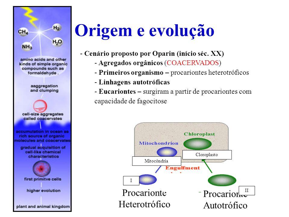 Origem e evolução - Cenário proposto por Oparin (início séc. XX) - Agregados orgânicos (COACERVADOS) - Primeiros organismo – procariontes heterotrófic
