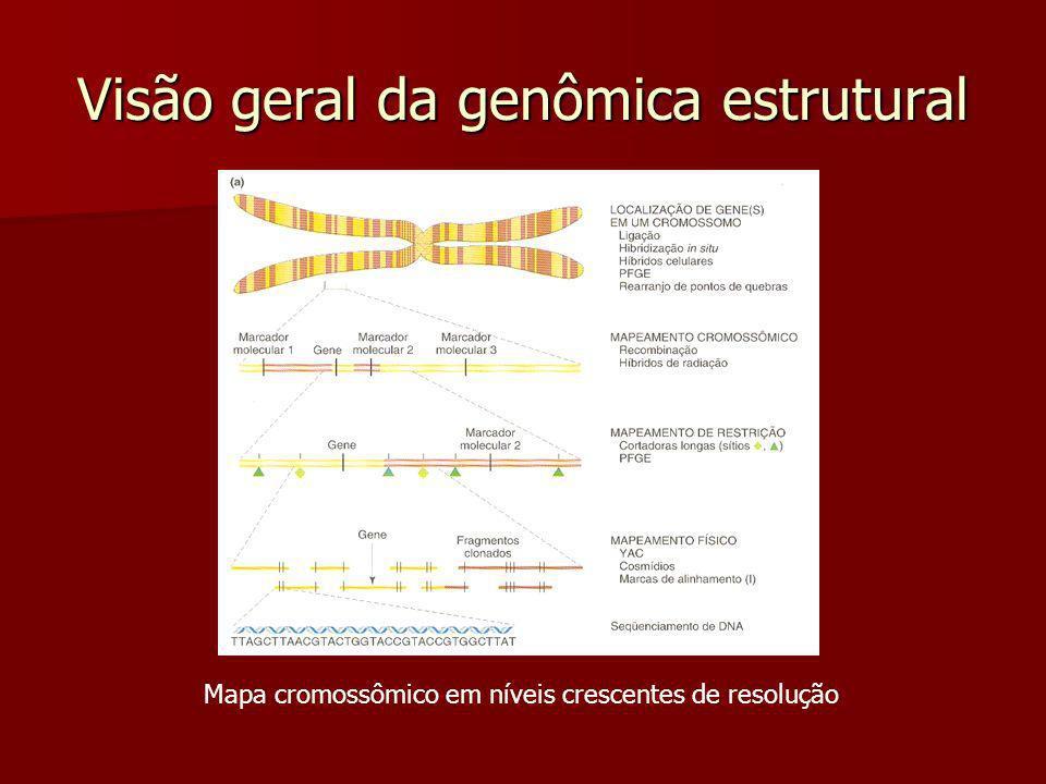Visão geral da genômica estrutural Mapa cromossômico em níveis crescentes de resolução