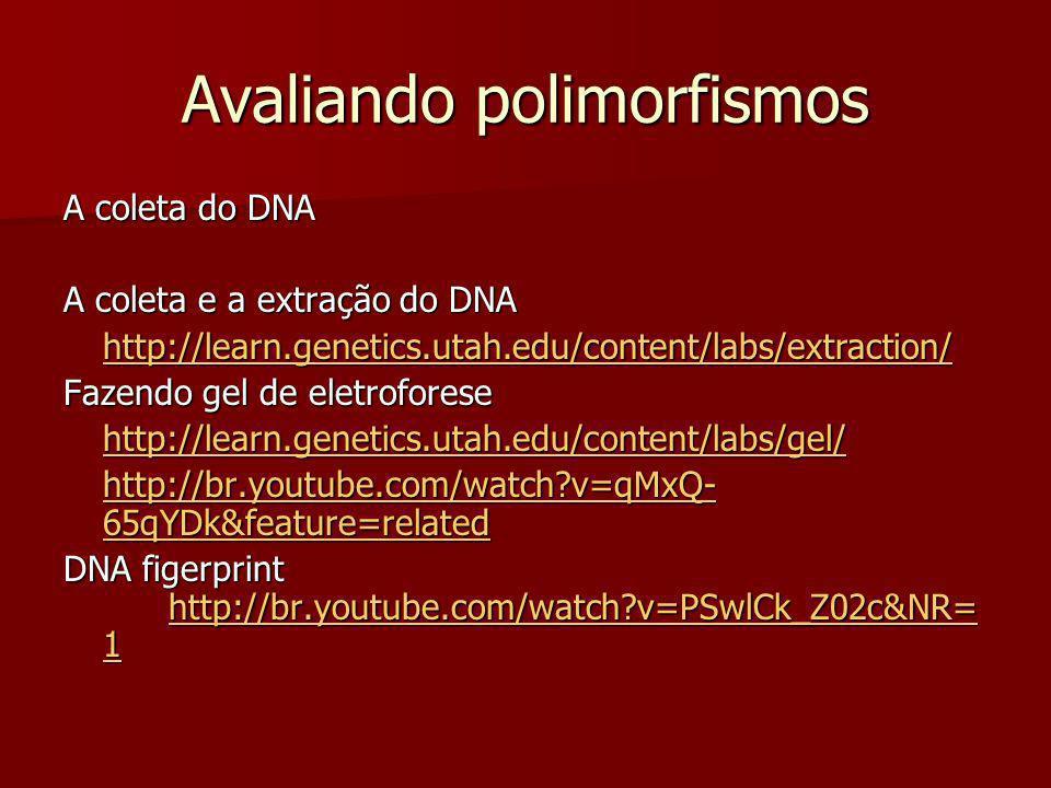 Fazendo cópias de uma sequencia de DNA Clonagem em plasmídeo http://br.youtube.com/watch?v=acKWdNj936o&NR=1 PCR - PCR - síntese enzimática in vitro de milhões de cópias de um segmento específico de DNA, através de amplificação em ciclos, na presença da enzima DNA polimerase http://br.youtube.com/watch?v=_YgXcJ4n- kQ&feature=related http://br.youtube.com/watch?v=_YgXcJ4n- kQ&feature=related E para se divertir aprendendo...