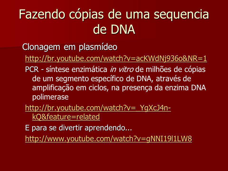 Fazendo cópias de uma sequencia de DNA Clonagem em plasmídeo http://br.youtube.com/watch?v=acKWdNj936o&NR=1 PCR - PCR - síntese enzimática in vitro de