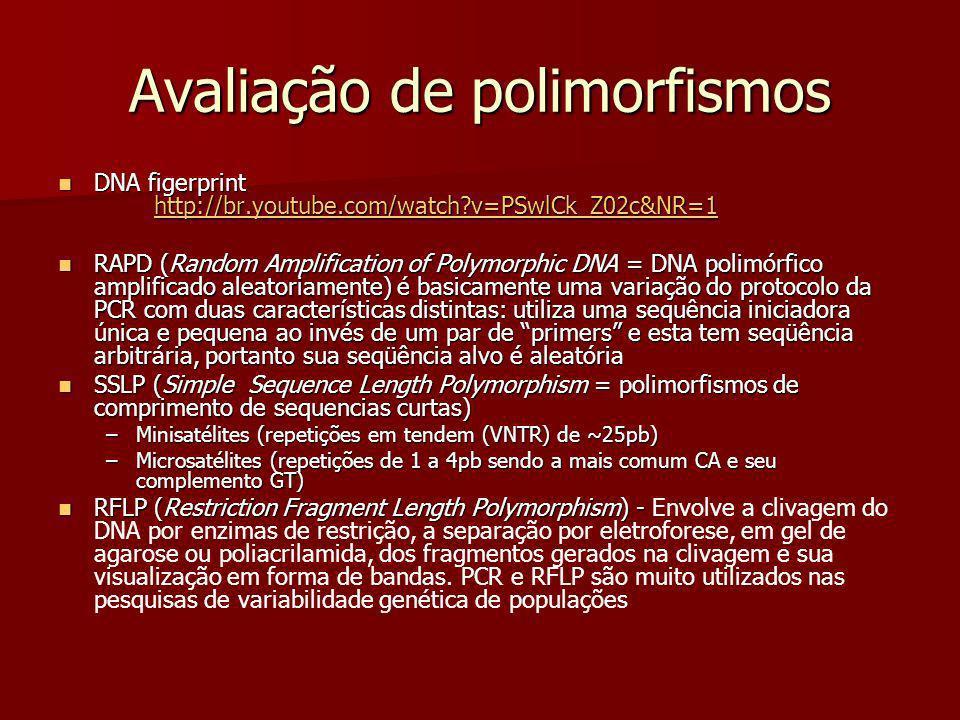 Avaliação de polimorfismos DNA figerprint http://br.youtube.com/watch?v=PSwlCk_Z02c&NR=1 DNA figerprint http://br.youtube.com/watch?v=PSwlCk_Z02c&NR=1