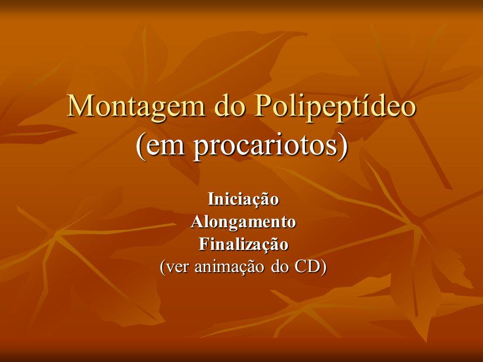 Montagem do Polipeptídeo (em procariotos) Montagem do Polipeptídeo (em procariotos) IniciaçãoAlongamentoFinalização (ver animação do CD)