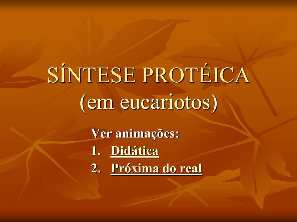 SÍNTESE PROTÉICA (em eucariotos) Ver animações: 1.Didática Didática 2.Próxima do real Próxima do realPróxima do real