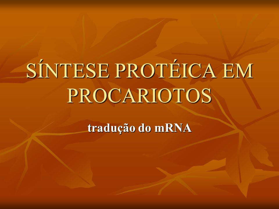 SÍNTESE PROTÉICA EM PROCARIOTOS tradução do mRNA