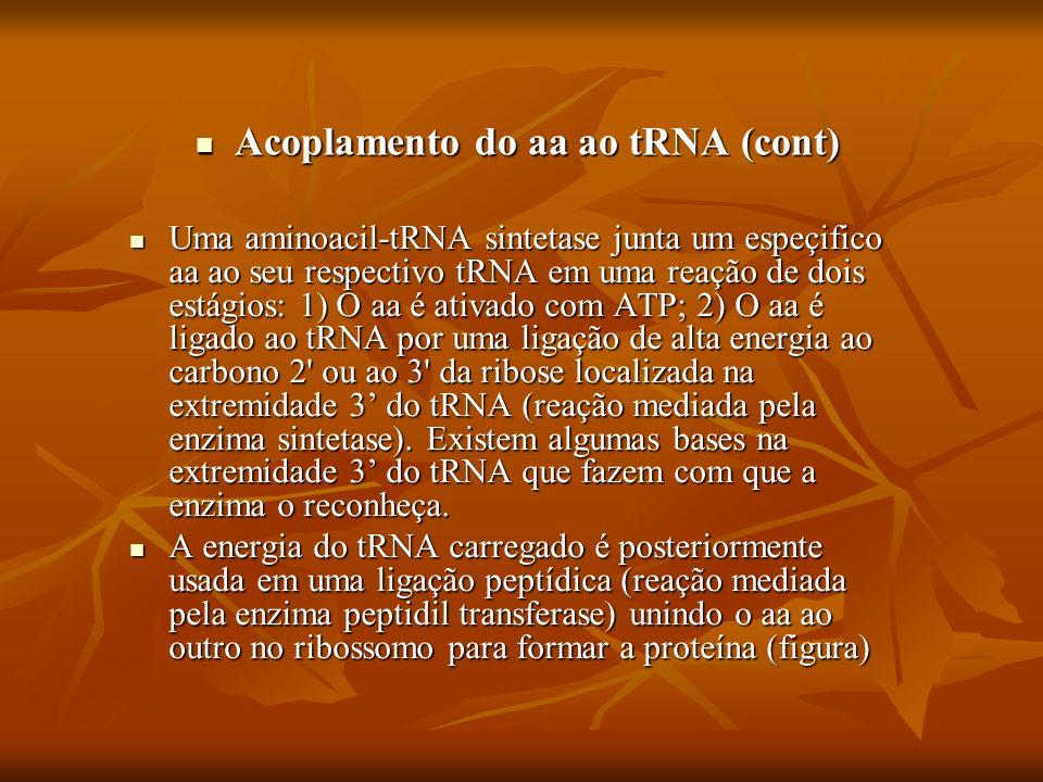 Acoplamento do aa ao tRNA (cont) Acoplamento do aa ao tRNA (cont) Uma aminoacil-tRNA sintetase junta um espeçifico aa ao seu respectivo tRNA em uma re