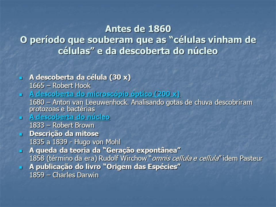 Antes de 1860 O período que souberam que as células vinham de células e da descoberta do núcleo A descoberta da célula (30 x) A descoberta da célula (