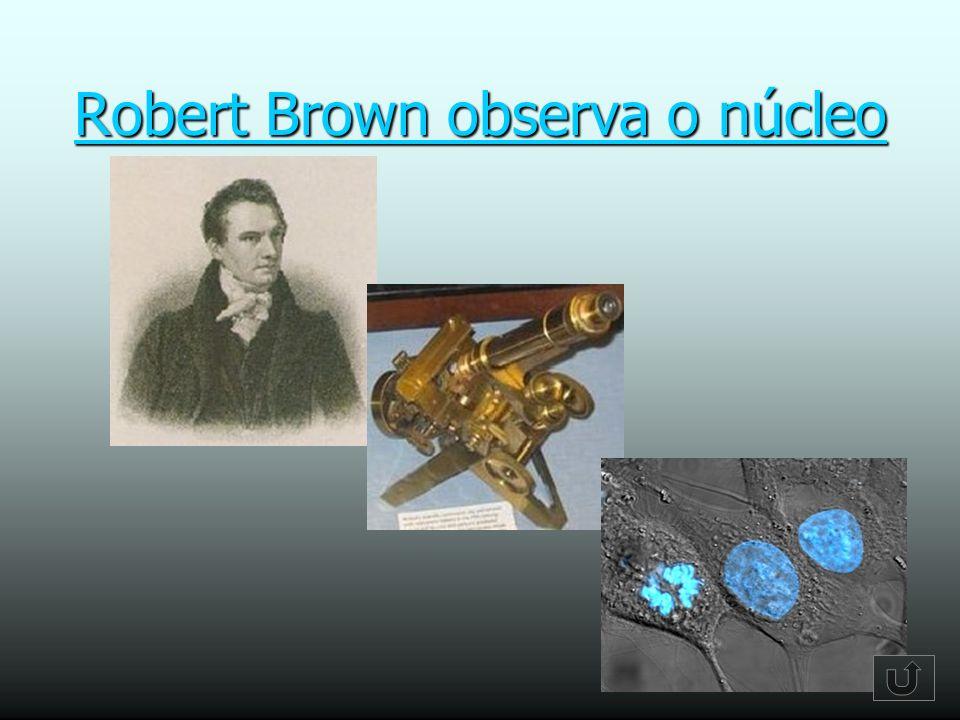 Resultado de imagen de núcleo brown