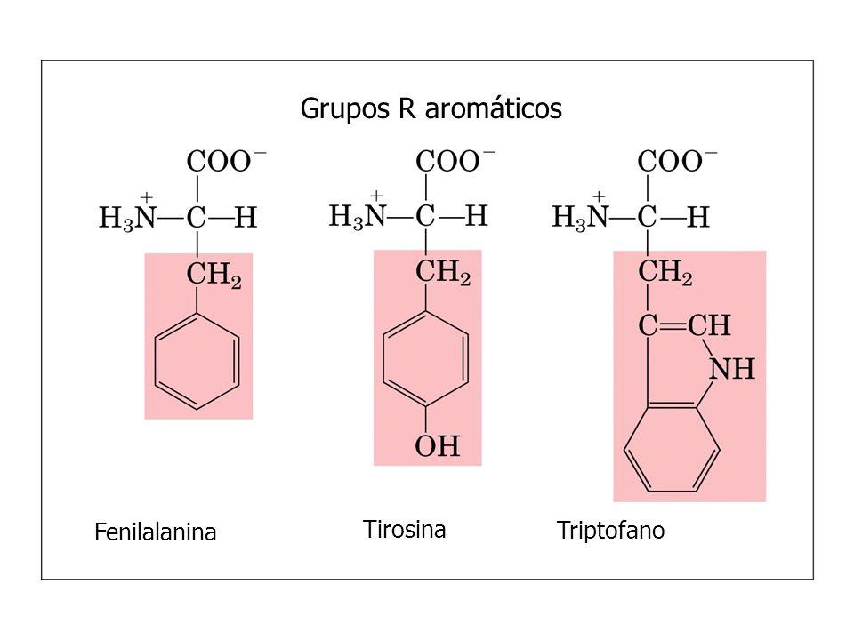 Grupos R alifáticos, não-polares GlicinaAlanina Valina Leucina Metionina Isoleucina