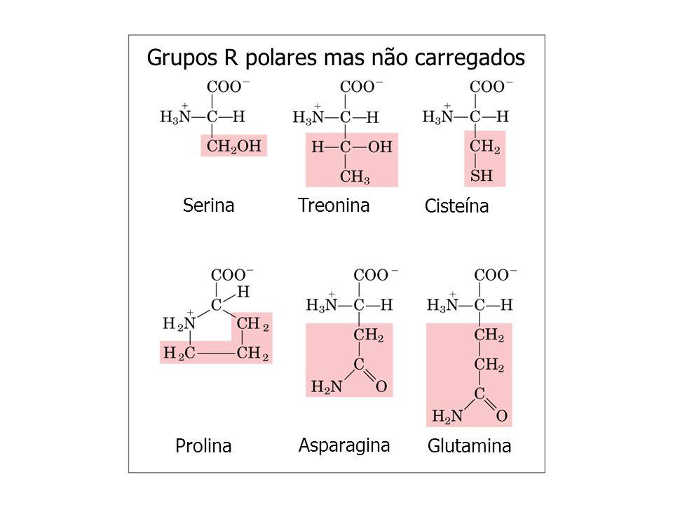 Grupos R aromáticos Fenilalanina Tirosina Triptofano