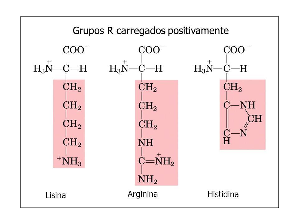Grupos R polares mas não carregados SerinaTreonina Cisteína Prolina Asparagina Glutamina