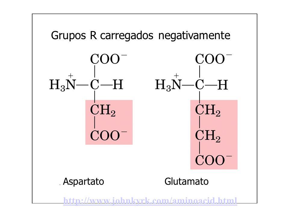 Grupos R carregados positivamente Lisina Arginina Histidina