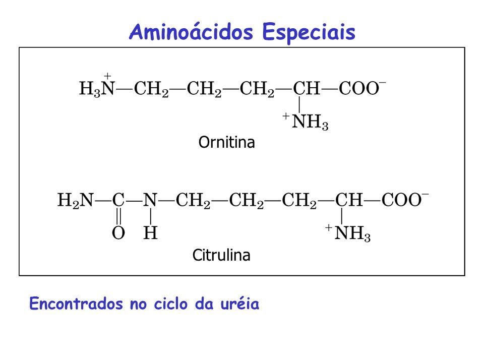 4-hidroxiprolina (colágeno) 5-hidroxilisina (colágeno) 6-N-metilisina (miosina) -carboxiglutamato (protrombina) Desmosina (elastina) selenocisteína Am