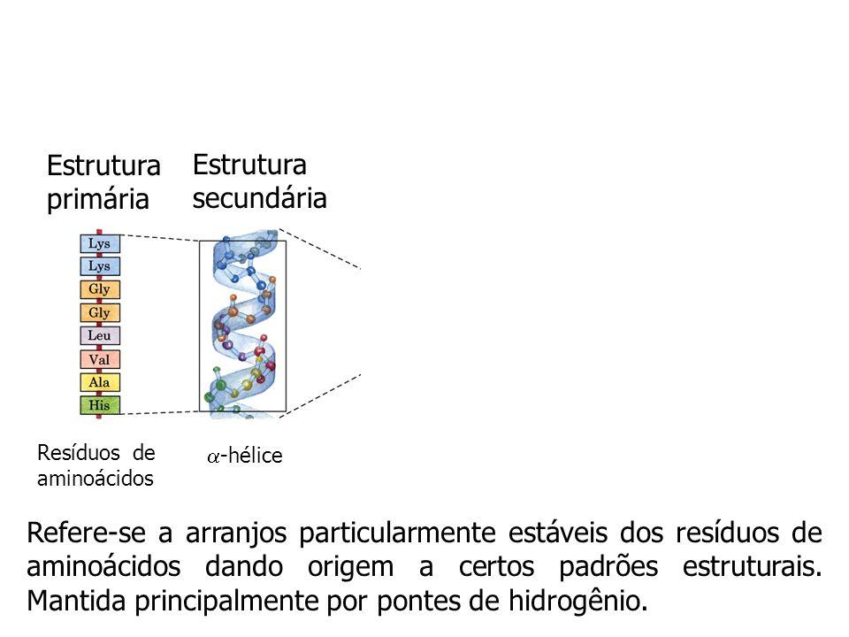 Estrutura primária Resíduos de aminoácidos Está relacionada com todas as ligações covalentes (principalmente ligações peptídicas e pontes dissulfeto)