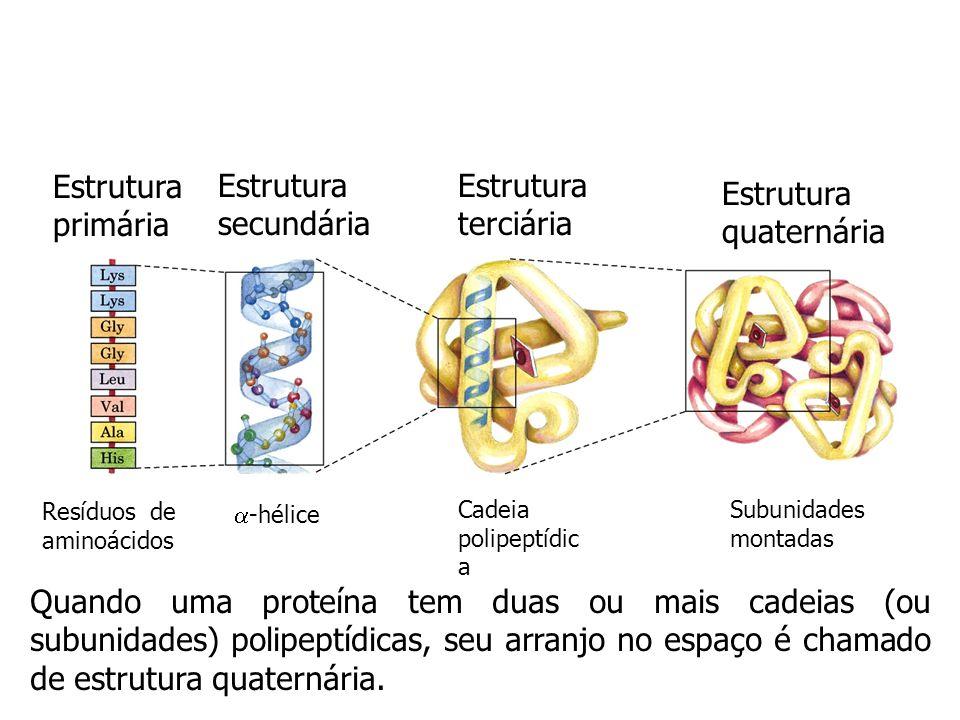 Estrutura primária Estrutura secundária Estrutura terciária Resíduos de aminoácidos -hélice Cadeia polipeptídic a Refere-se a todos os aspectos do dob