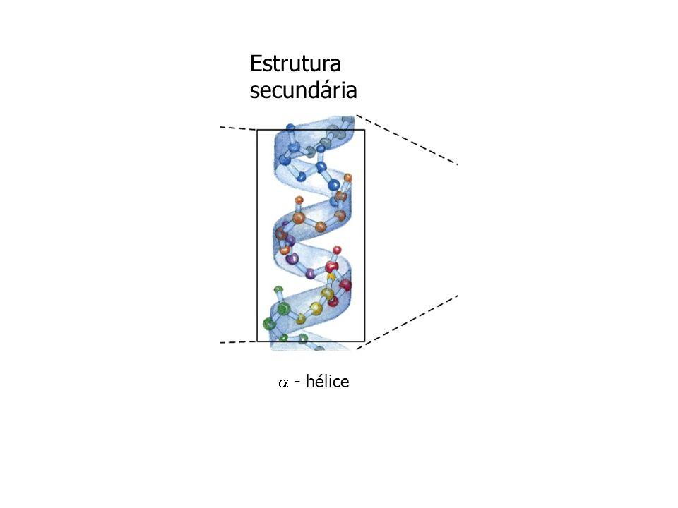 Colágeno Função: dar força, encontrado em tecidos conectivos, tais como, tendão, cartilagem, matriz orgânica do osso. aminoácidos não-padrões: 4-hidro