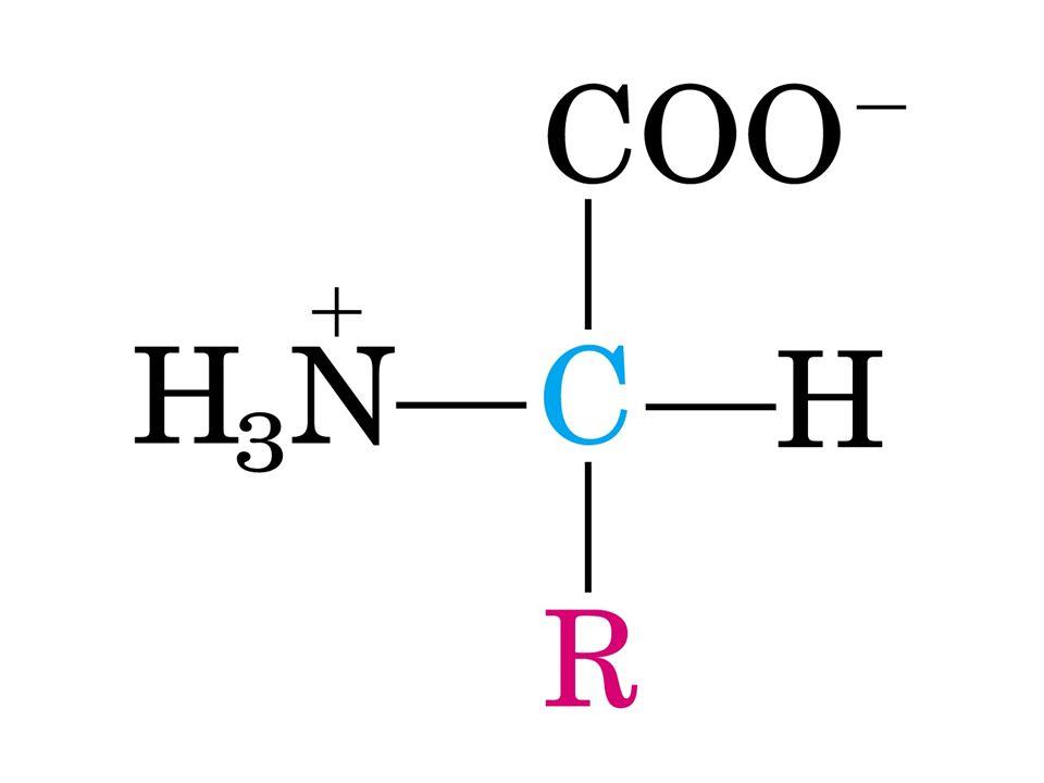 Aminoácidos aa padrão, primários, normais ou comuns: fazem parte das proteínas. aa de proteínas oticamente ativos são L-estereoisômeros, exceto a glic