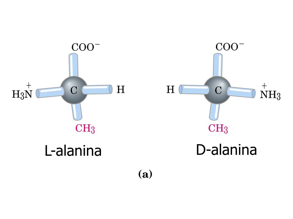 L-alanina D-alanina