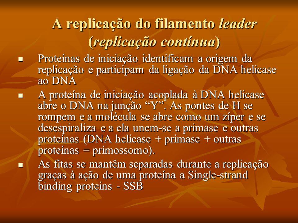 A replicação do filamento leader (replicação contínua) Proteínas de iniciação identificam a origem da replicação e participam da ligação da DNA helicase ao DNA Proteínas de iniciação identificam a origem da replicação e participam da ligação da DNA helicase ao DNA A proteína de iniciação acoplada à DNA helicase abre o DNA na junção Y.