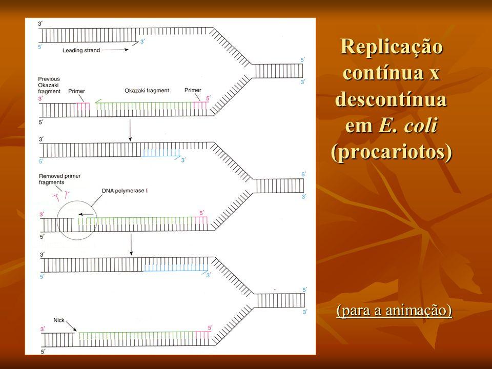 Replicação contínua x descontínua em E. coli (procariotos) (para a animação) (para a animação)