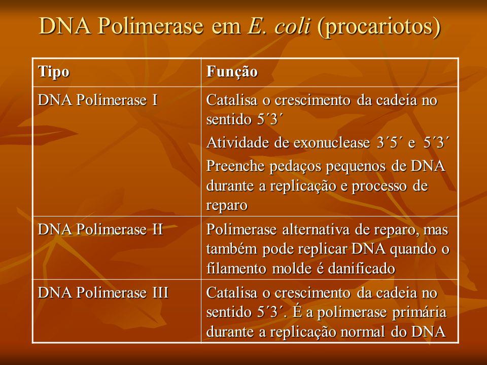 DNA Polimerase em E.