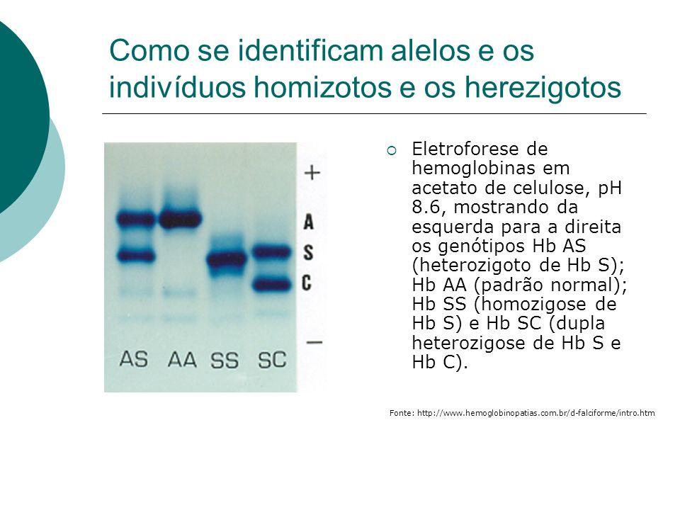 Como se identificam alelos e os indivíduos homizotos e os herezigotos Eletroforese de hemoglobinas em acetato de celulose, pH 8.6, mostrando da esquer