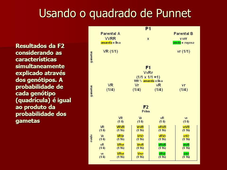 Resultados da F2 considerando as características simultaneamente explicado através dos genótipos. A probabilidade de cada genótipo (quadrícula) é igua