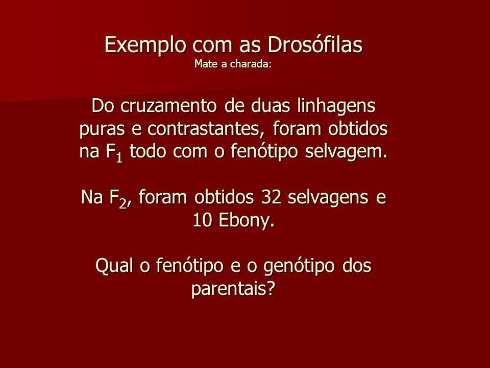 Exemplo com as Drosófilas Mate a charada: Do cruzamento de duas linhagens puras e contrastantes, foram obtidos na F 1 todo com o fenótipo selvagem.