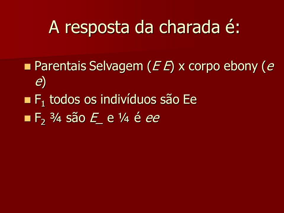 A resposta da charada é: A resposta da charada é: Parentais Selvagem (E E) x corpo ebony (e e) Parentais Selvagem (E E) x corpo ebony (e e) F 1 todos os indivíduos são Ee F 1 todos os indivíduos são Ee F 2 ¾ são E_ e ¼ é ee F 2 ¾ são E_ e ¼ é ee