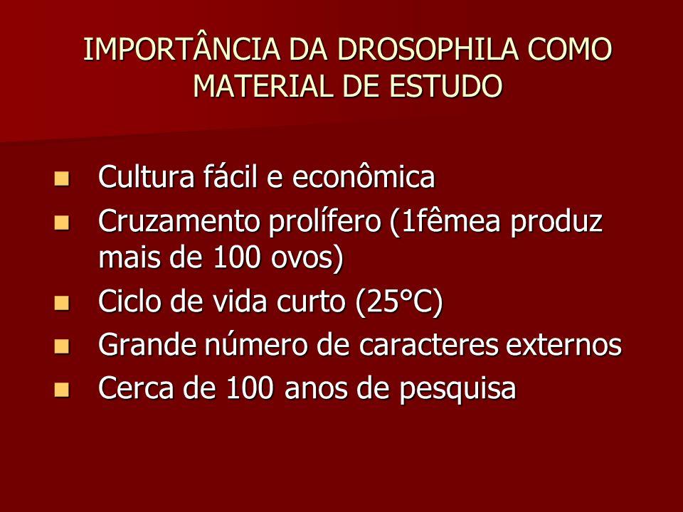 IMPORTÂNCIA DA DROSOPHILA COMO MATERIAL DE ESTUDO Cultura fácil e econômica Cultura fácil e econômica Cruzamento prolífero (1fêmea produz mais de 100