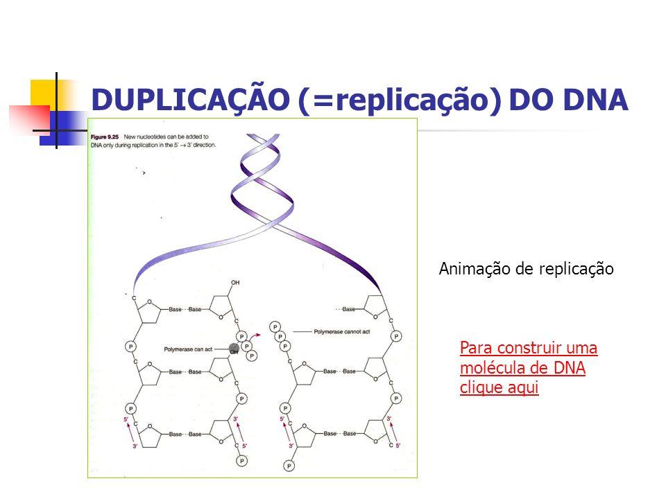 DUPLICAÇÃO (=replicação) DO DNA Animação de replicação Para construir uma molécula de DNA clique aqui