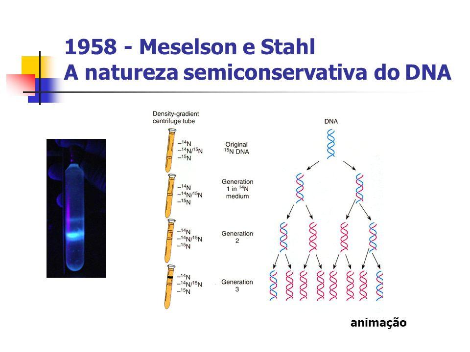 1958 - Meselson e Stahl A natureza semiconservativa do DNA animação