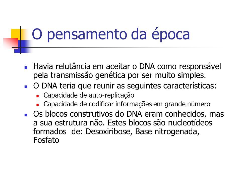 O pensamento da época Havia relutância em aceitar o DNA como responsável pela transmissão genética por ser muito simples. O DNA teria que reunir as se