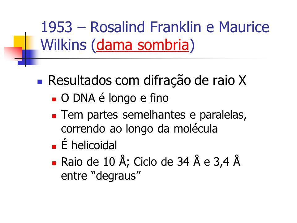 1953 – Rosalind Franklin e Maurice Wilkins (dama sombria)dama sombria Resultados com difração de raio X O DNA é longo e fino Tem partes semelhantes e