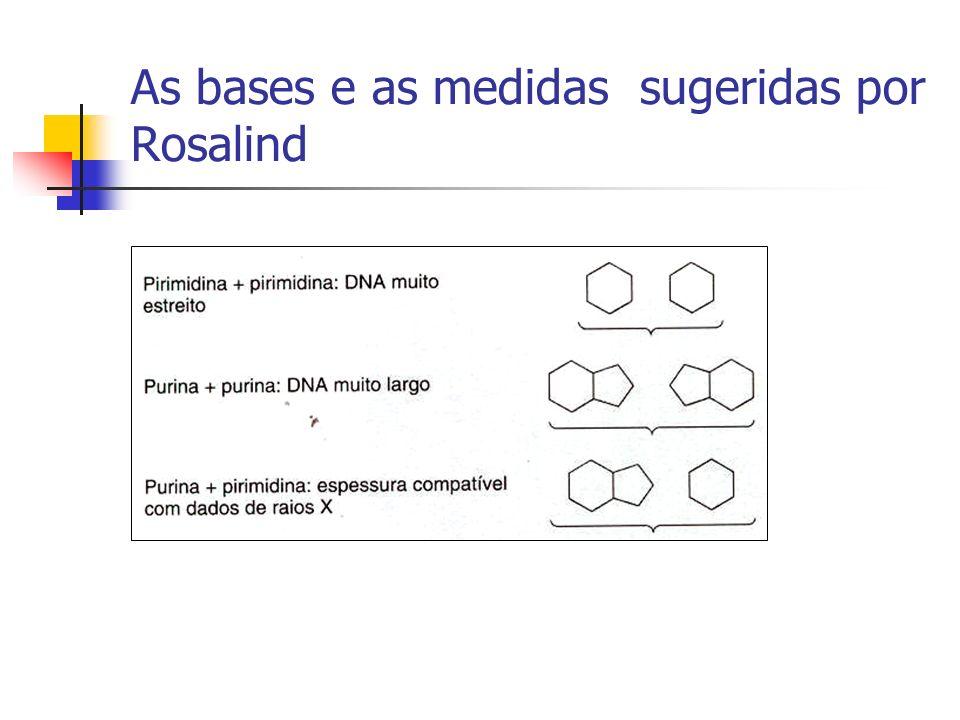 As bases e as medidas sugeridas por Rosalind