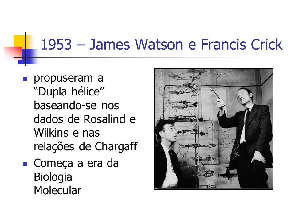 1953 – James Watson e Francis Crick propuseram a Dupla hélice baseando-se nos dados de Rosalind e Wilkins e nas relações de Chargaff Começa a era da B