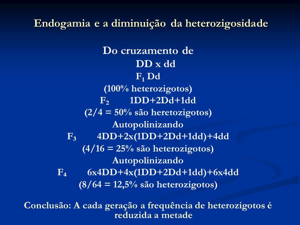 Endogamia e a diminuição da heterozigosidade Do cruzamento de DD x dd F 1 Dd (100% heterozigotos) F 2 1DD+2Dd+1dd (2/4 = 50% são heretozigotos) Autopo