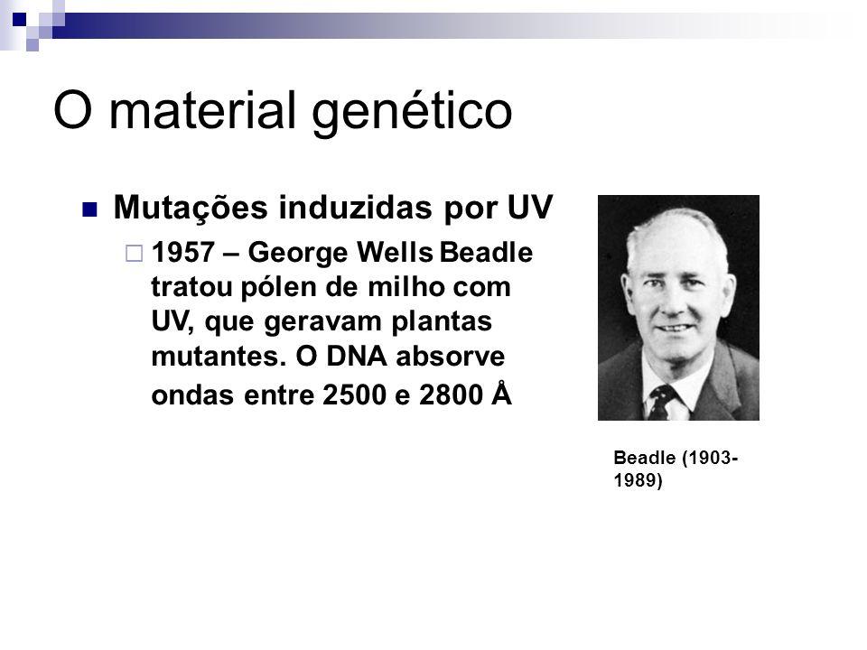 O material genético Beadle (1903- 1989) Mutações induzidas por UV 1957 – George Wells Beadle tratou pólen de milho com UV, que geravam plantas mutante
