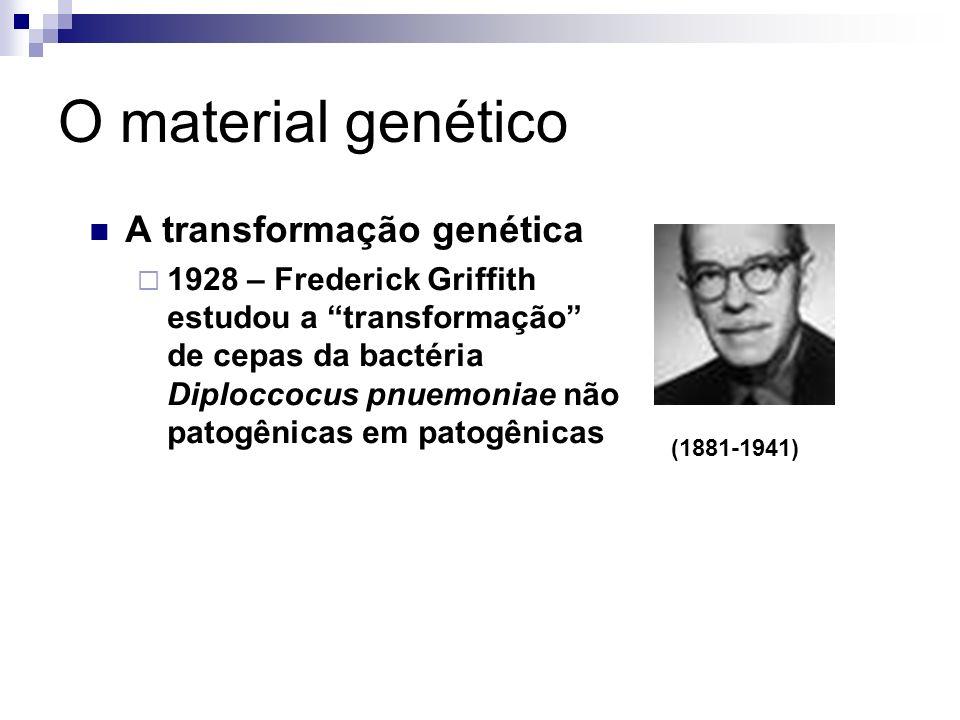 O material genético A transformação genética 1928 – Frederick Griffith estudou a transformação de cepas da bactéria Diploccocus pnuemoniae não patogên