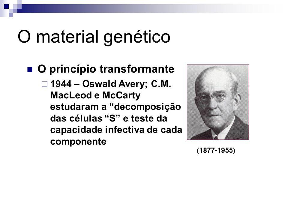 O material genético (1881-1941) (1877-1955) O princípio transformante 1944 – Oswald Avery; C.M. MacLeod e McCarty estudaram a decomposição das células