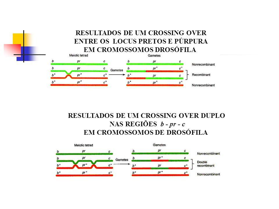 RESULTADOS DE UM CROSSING OVER ENTRE OS LOCUS PRETOS E PÚRPURA EM CROMOSSOMOS DROSÓFILA RESULTADOS DE UM CROSSING OVER DUPLO NAS REGIÕES b - pr - c EM