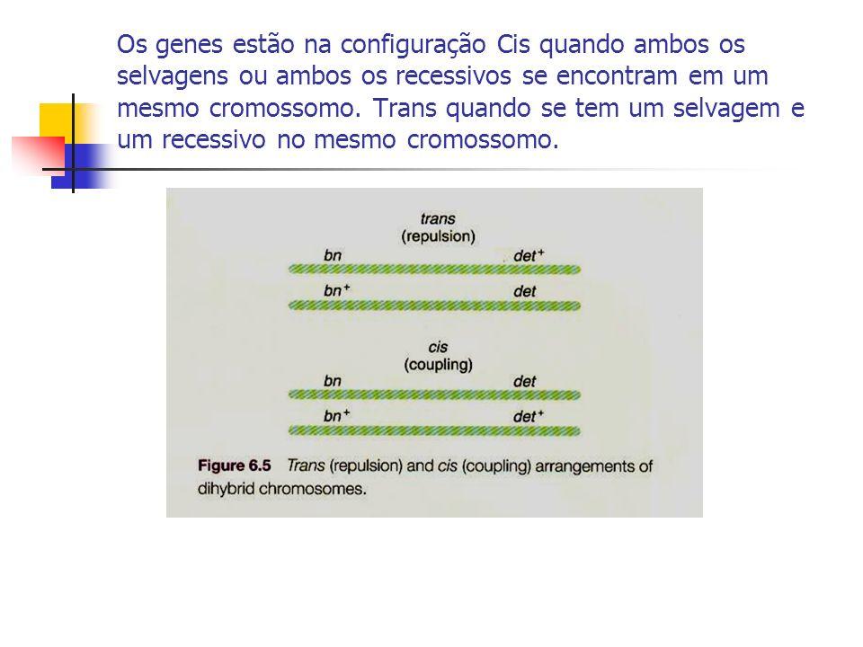 Os genes estão na configuração Cis quando ambos os selvagens ou ambos os recessivos se encontram em um mesmo cromossomo. Trans quando se tem um selvag
