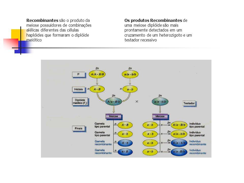 Recombinantes são o produto da meiose possuidores de combinações alélicas diferentes das células haplóides que formaram o diplóide meiótico Os produto
