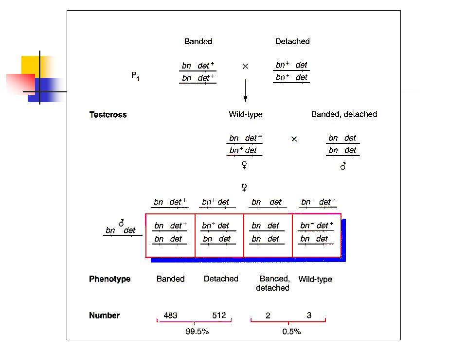 CRUZAMENTO DE DOIS PONTOS É a análise de 2 locus.
