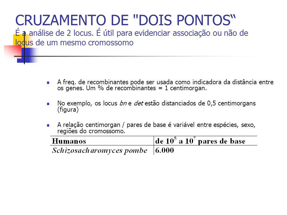 CRUZAMENTO DE TRÊS PONTOS É a análise de 3 locus, cada um segregando 2 alelos.